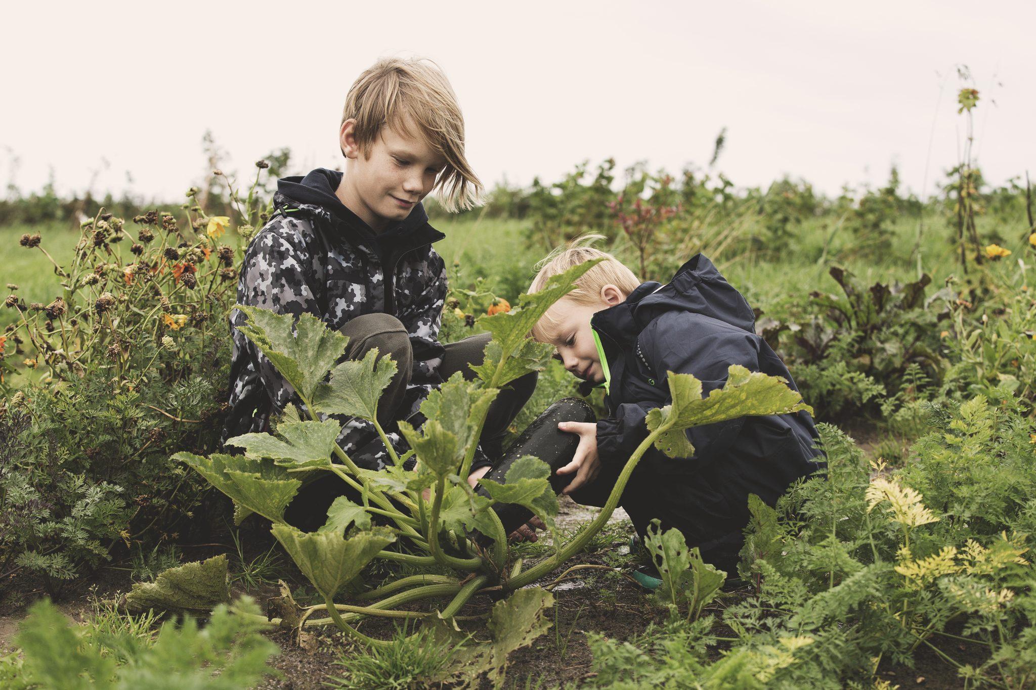 Drenge i naturen