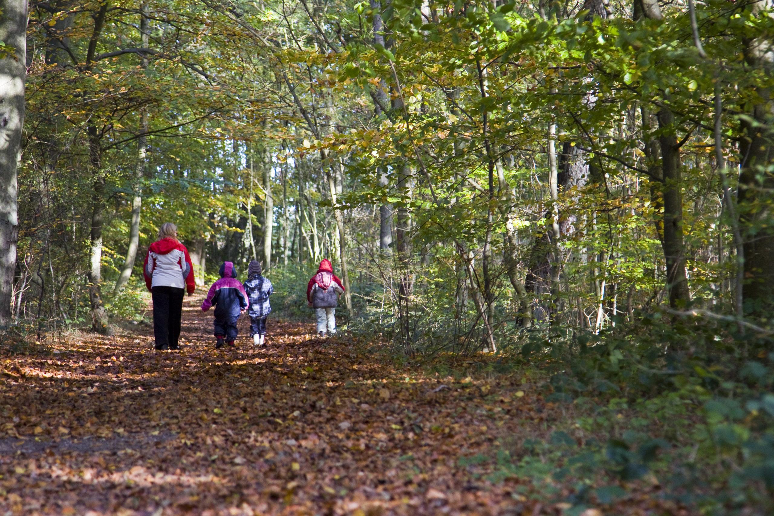 Children in a forest